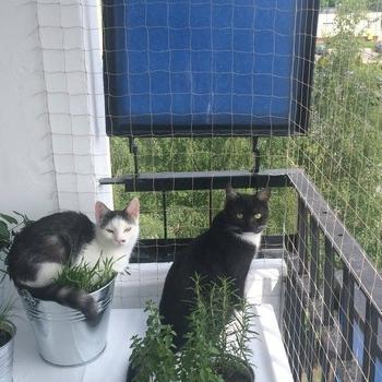 siatki-na-balkon125