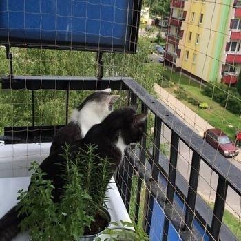 siatki-na-balkon130